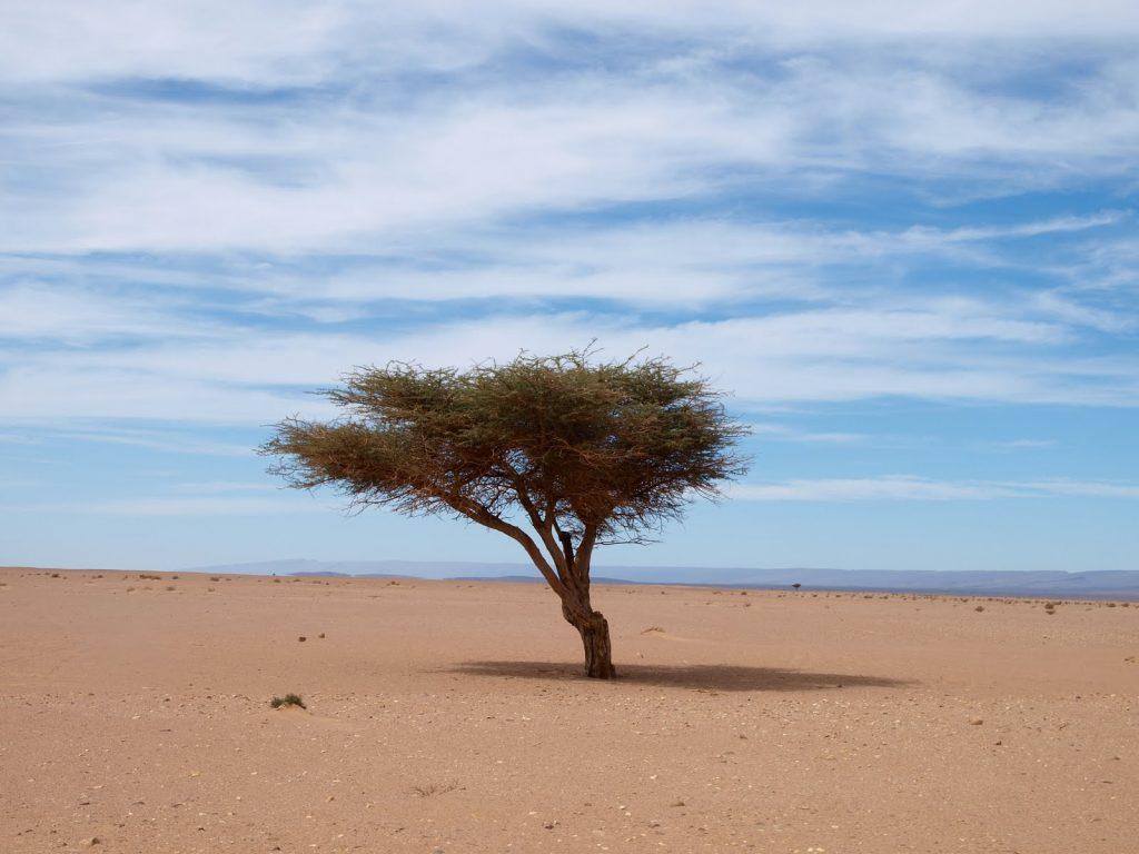 Reis fotografie Marokko Coen Ruys 8
